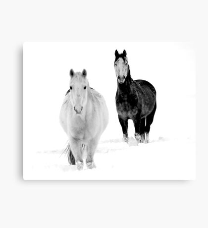 After the Blizzard 16 B&W Canvas Print