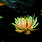 Lotus by Nalini Bhat