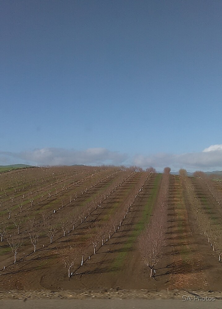 New Orchard by SA-Photos