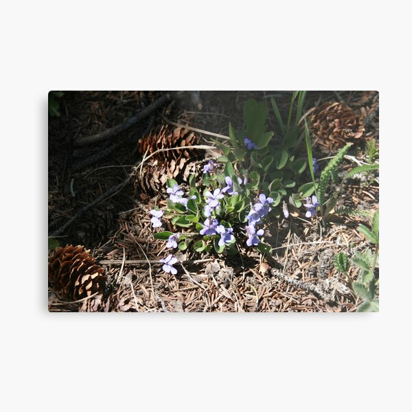 First Flower of the Spring Metal Print