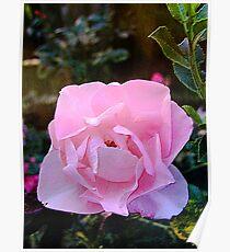 Perhaps Love Blooms Poster