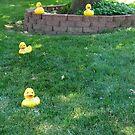 Duck walk by Jamaboop