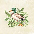 Ente von LCWaterworth