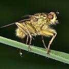 Fly On Grass by Gareth Jones