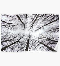 Trees, Poitou-Charante, France Poster