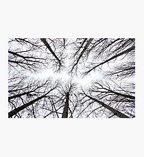 Trees, Poitou-Charante, France Photographic Print