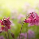 Pink Bells by DAntas