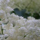 White Lilac Tree by Jamaboop