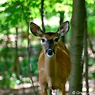 Bambi's World by GraceNotes