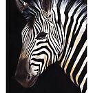 Zebra von WhileIWonder