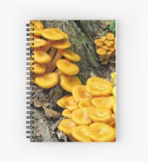 Omphalotus olearius Spiral Notebook