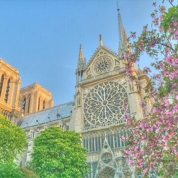 Notre Dame in Spring Glory by Michaelm43