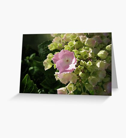 I'm just beginning to bloom Greeting Card