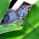 Dragonfly by Loewin