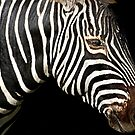 I Am A Zebra by miroslava