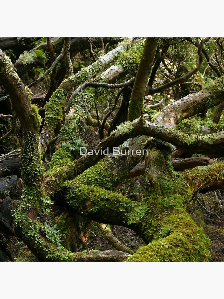 Forest jumble by DavidBurren