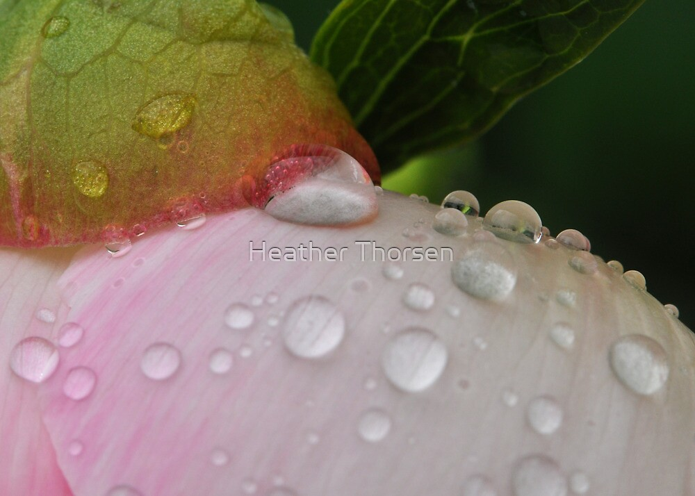 Peony Pearls by Heather Thorsen