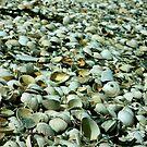 Lots of mussels by Dorota Rosinska