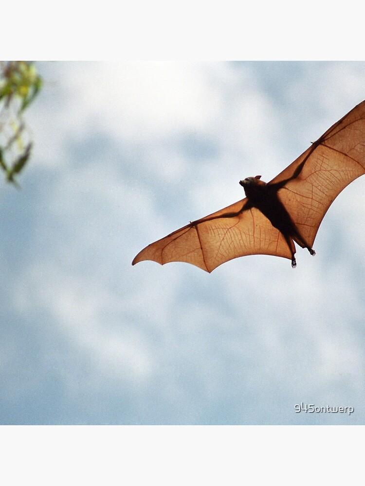 Fruit Bat von 945ontwerp