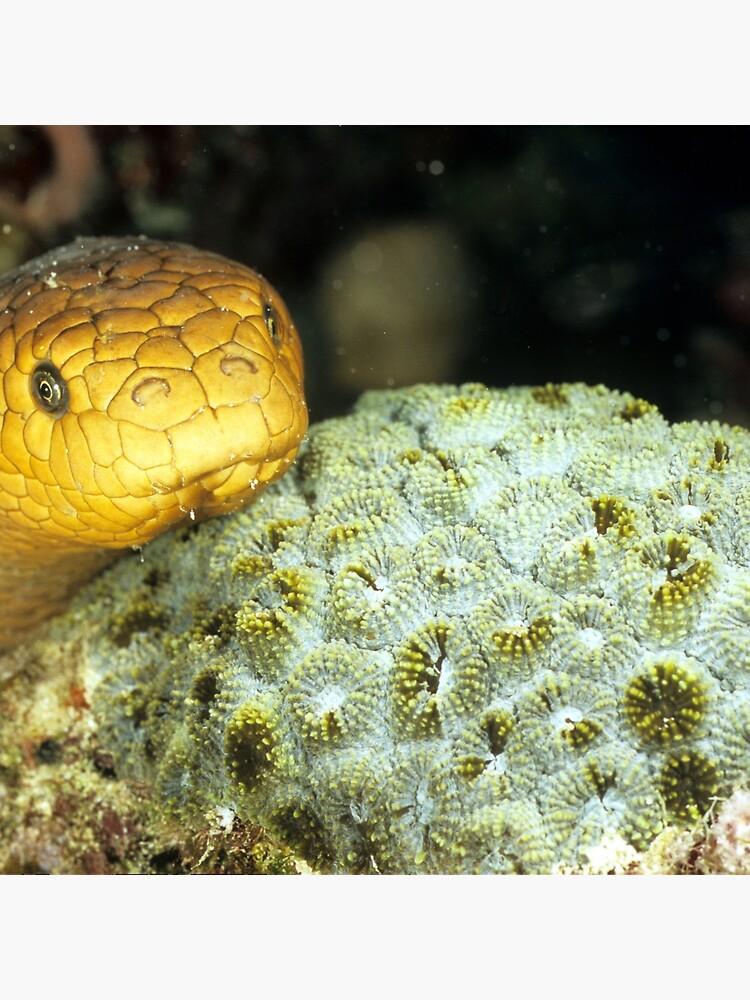 Olive sea snake by DavidWachenfeld