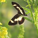Tiny Butterfly In the Wild by teresa731
