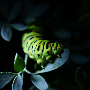 Caterpillar in the light by LuisCLL
