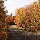 October Drive by Janika