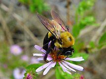 Buzzing Around by Judy Wanamaker