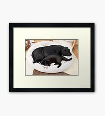 Hey will you budge over and give me some room! Framed Print