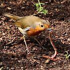 Robin & Wurm von AnnDixon