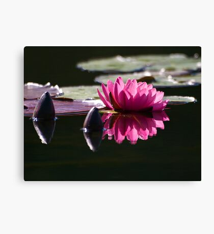 Buds and Bloom Canvas Print