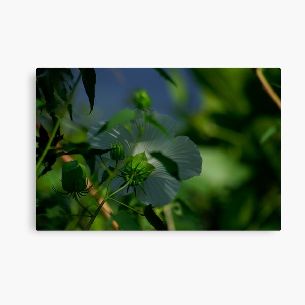Flower and Puds Canvas Print