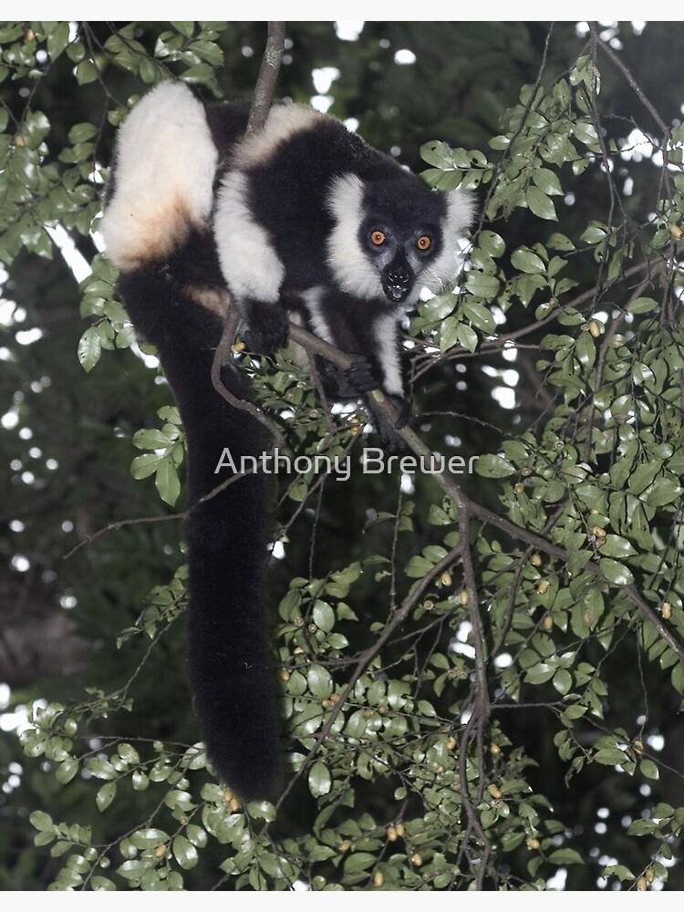Treeing the lemur by dailyanimals