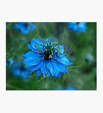 Spiky Blue Love Photographic Print