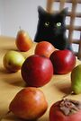Black Cat with Fruits von Marianna Tankelevich