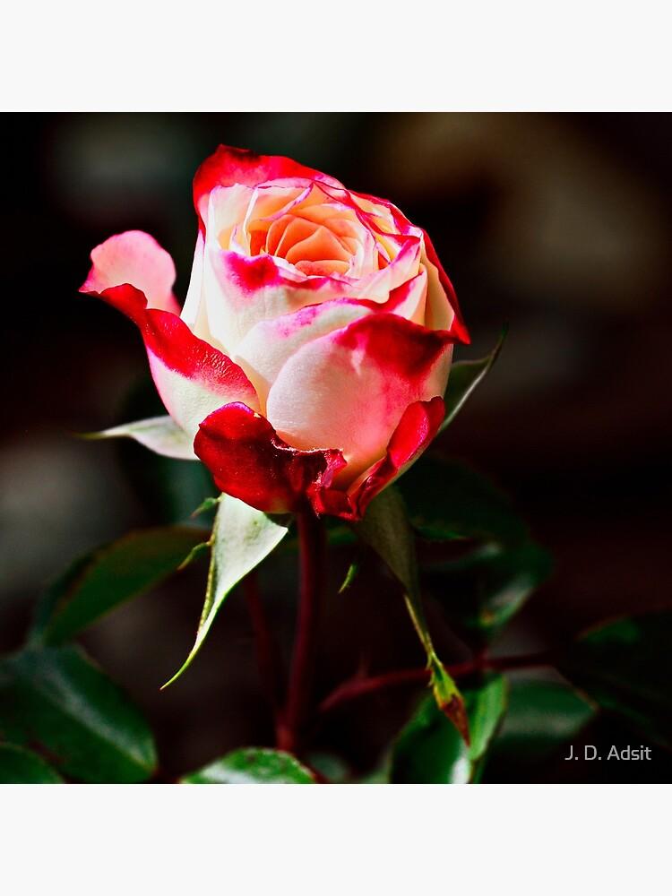 Bright & Vivid I Savor Her Softness by adsitprojectpro