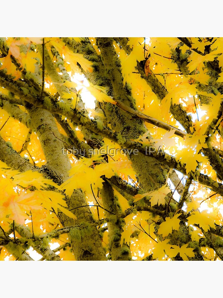 Colours of Fall by tobysnelgrove