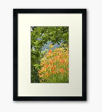 Country Lily Framed Print
