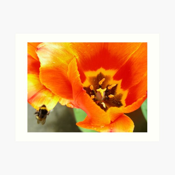 Bee Ravished Art Print