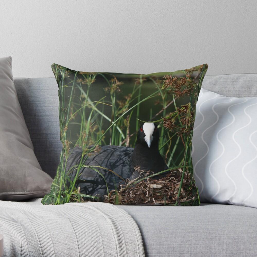 Eurasian Coot sitting on its nest Throw Pillow