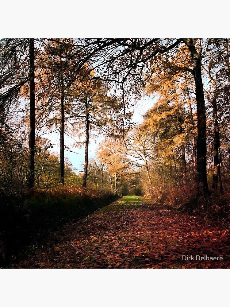 Path by Delbaere