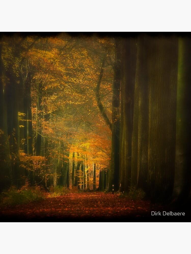 Misty light in woods  by Delbaere