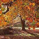 Autumn serenity by Tony Middleton