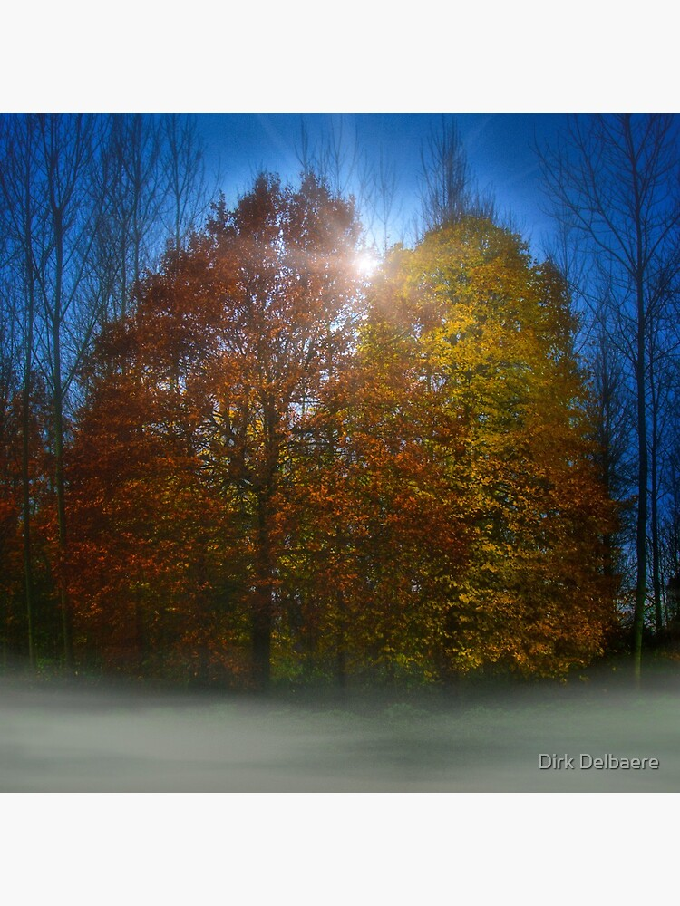 coloured trees by Delbaere
