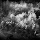 tree tops by Dorit Fuhg