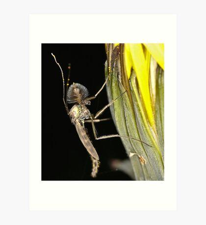Unknown Visitor (Phantom Midge - Chaoboridae) Art Print