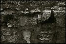 Auschwitz I Gas Chamber outside wall by Peter Harpley