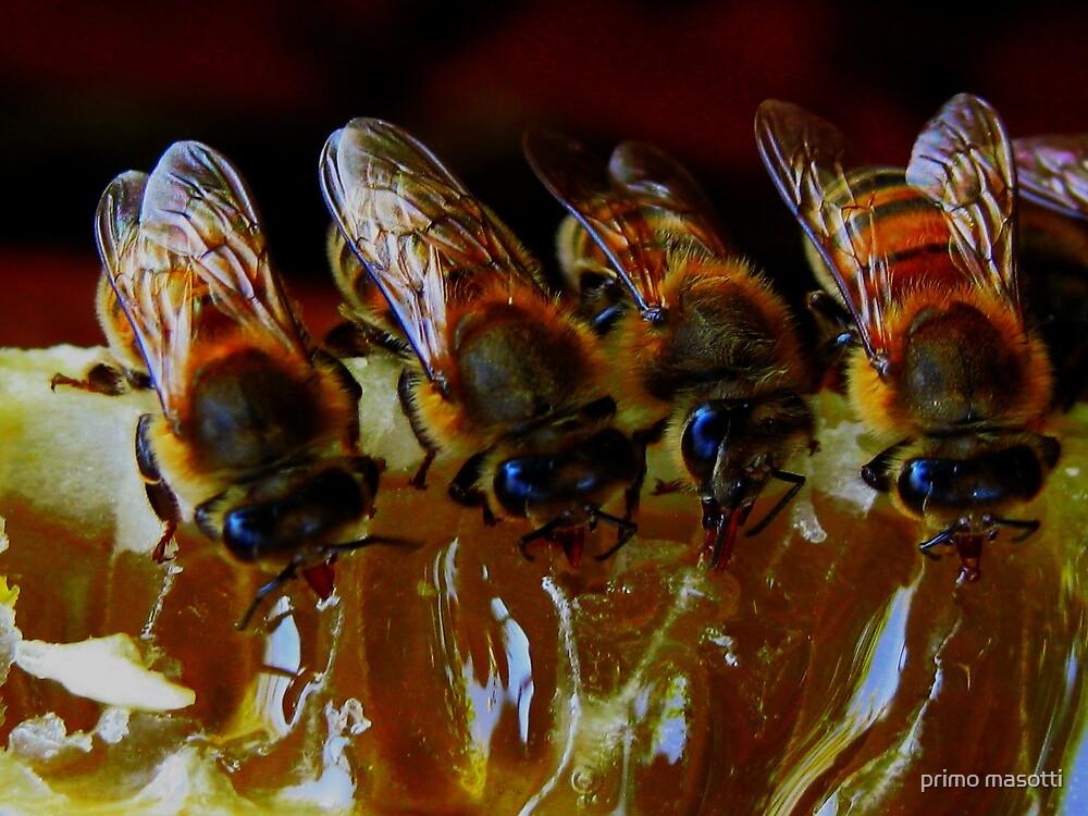 Api, che immettono il miele nelle cellette - missano  ( zocca modena italy)...... 047 by primo masotti