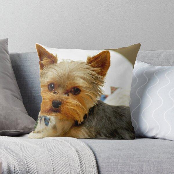 Yorkshire Terrier & Quilt Throw Pillow