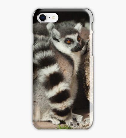 Ring-tailed Lemur Ball iPhone Case/Skin